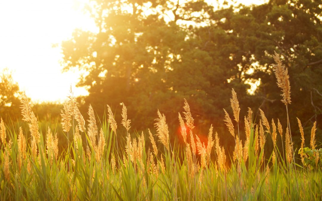 How would it be if you could dramatically reduce your hay fever symptoms?